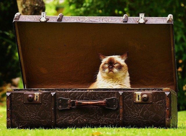 バック,猫,荷物