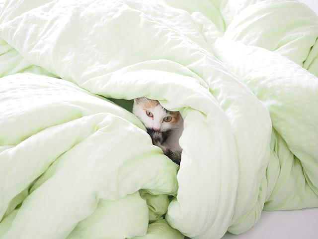 猫,ベット,寒い,温かい