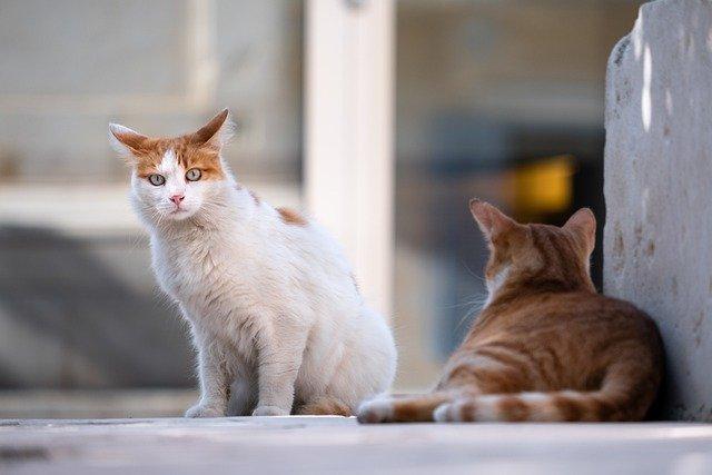 猫,野良猫
