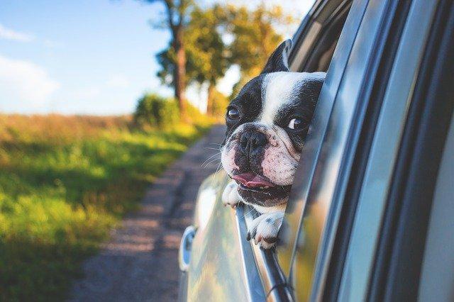 犬,車,カー,ドライブ,